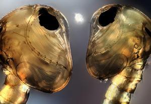 Najlepsze ujęcia świata niedostępnego dla ludzkiego oka - wyniki konkursu Olympus BioScapes 2014