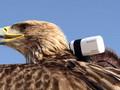 Lot orła z kamerą ze szczytu najwyższego budynku świata