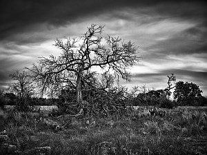 Cyfrowa ciemnia w aparacie z Olympusem - zdjęcia czarno-białe