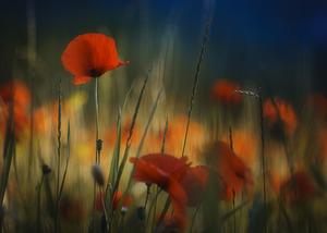 Zwycięzcy konkursu fotograficznego Powiew wiosny
