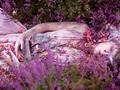 """""""Wonderland"""" Kirsty Mitchell"""