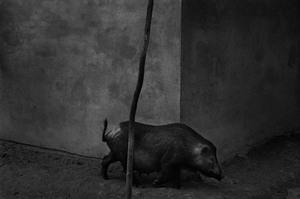 Jak powstały nagrodzone fotografie laureatów konkursu Vintage Grand Prix 2015