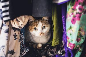 Jak robić lepsze zdjęcia kotów - 10 wskazówek Felicity Berkleef