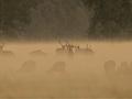 Fotografowanie ssaków w praktyce