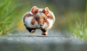 Bardzo śmieszne zdjęcia dzikich zwierząt - zwycięzcy konkursu Comedy Wildlife Photography Awards