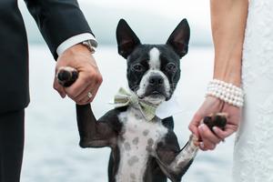 Fotografia ślubna z domowymi zwierzętami - co warto wiedzieć?