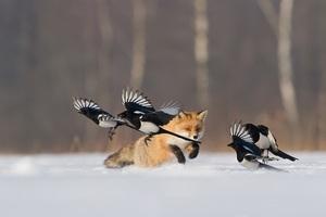 Wielki Konkurs Fotograficzny im Włodzimierza Puchalskiego