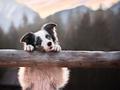 """Iza Łysoń tworzy """"wydanie drugie poprawione"""" świata, czyli zjawiskowe portrety psów"""