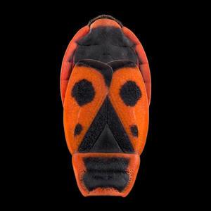 Niesamowite zdjęcia makro - owady jak maski