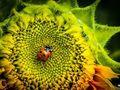 Ćwiczenie fotograficzne: harmonia barw