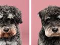 """Pies u fryzjera - zabawna seria zdjęć """"przed"""" i """"po"""" Grace'a Chon"""