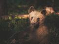 Znakomite zdjęcia dzikiej przyrody 21-latka przekraczają granice etyki?