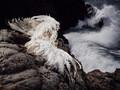 Kobiety ptaki - wybitne zdjęcia  Benjamina Vona Wonga
