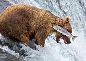 40 finałowych, bardzo śmiesznych zdjęć dzikich zwierząt