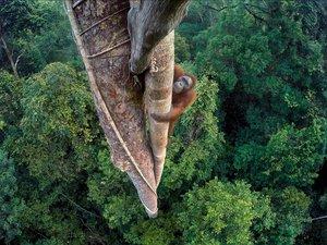 Wildlife Photographer of The Year 2016 - galeria nagrodzonych fotografii