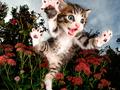 Latające kociaki w obiektywie Setha Casteela