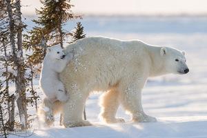 Wildlife Photographer of the Year 2016 - można głosować na nagrodę publiczności