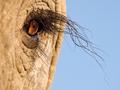 Słonie w obiektywie 65 fotografów - album zarobił już ponad 100 tys. funtów