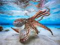 Najlepsze podwodne fotografie - galeria nagrodzonych zdjęć konkursu Underwater Photographer Of The Year 2017