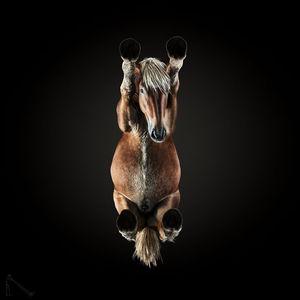 Jaki jest koń, każdy widzi - ale czy na pewno? Pionierska perspektywa na zdjęciach Andriusa Burba