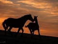 Mój przyjaciel koń Jerzego Safijańskiego