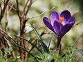 Obiektyw na wiosnę