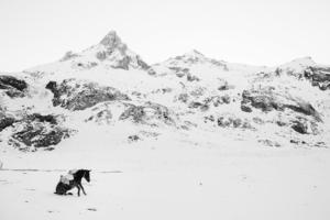 Frederik Buyckx fotografem roku z nagrodą 25 000 dolarów - znamy wyniki konkursu Sony World Photography Awards 2017