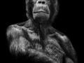 Emocje u naszych najbliższych krewnych - cykl czarno-białych portretów inHUMAN Pawła Bogumiła