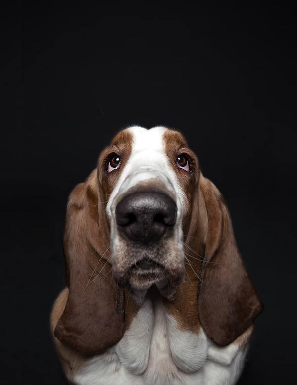 Galeria osobowości psów