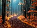 Wszystko co musisz wiedzieć o fotografowaniu jesieni