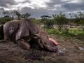 Galeria zwycięskich zdjęć konkursu Wildlife Photographer of the Year 2017. Zachwycające fotografie dzikiej przyrody