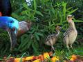 Jak powstało to zdjęcie? Zachowania ptaków - finałowe fotografie konkursu Wildlife Photographer of the Year 2017