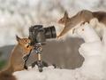 Fotografowanie przyrody - jutro rozpoczynamy nową edycję e-kursu