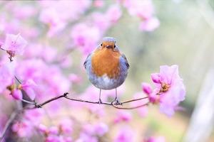 Zdjęcia wiosny - kilka pomysłów na fotograficzne przywitanie wiosny