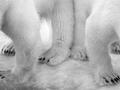 Poznaj najważniejsze konkursy fotograficzne świata: Wildlife Photographer of the Year