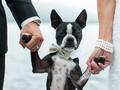 Sesja ślubna z domowymi pupilami - poznaj kilka praktycznych rad od profesjonalisty