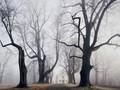 Krajobrazy z baśni Braci Grimm odkryte w Środkowej Europie - piękne zdjęcia Kiliana Schönbergera