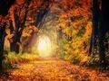 Ostatnie październikowe kursy fotografii online: 2 w cenie 1