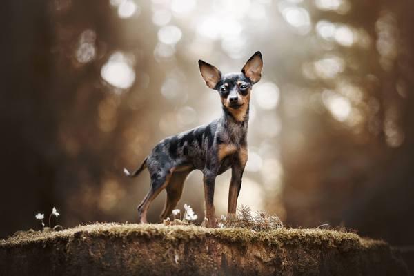Zdjęcia psów Kristyna Kvapilova