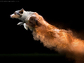 Skaczące psy, które pozostawiają po sobie kolorowy ślad