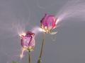 Kruchość kwiatów i potęga wyładowań - zobacz niezwKruchość kwiatów i potęga wyładowań - zobacz niezwykłe praca Hu Weiyiykłe praca Hu Weiyi