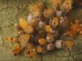 Fascynujący time lapse ukazujący cykl życia biedronki