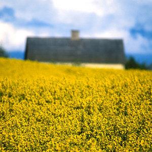 Warsztaty fotografii krajobrazowej w Smolnikach